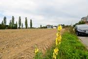 Das Grundstück an der Ecke Sonnenhof-/Schaffhauserstrasse, heute noch in Besitz der Stadt. (Bild: Donato Caspari)