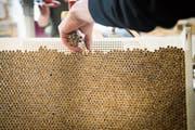 Ein Verkauf der Tabakmanufaktur in Steinach an den US-Konzern Gunpowder hat sich als Fake News entpuppt. (Bild: Ralph Ribi (Steinach, 15. Mai 2018))