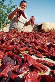 Teuflisches unter der Sonne: Chilis ausgelegt zum Trocknen in Arizona.