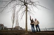Gemeinderat Thomas Ribi und Gartenbauer René Singer unter der neuen Hängeulme. (Bild: Reto Martin)