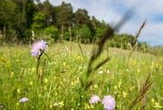 Mithilfe der Naturkommission soll unter anderem die Biodiversität gefördert werden. (Bild: Reto Martin)