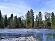 Der zugefrorene Teufenweiher in Neuenkirch. (Bild: Urs Gutfleisch, Neuenkirch, 23. Januar 2019)