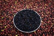 Wilder Kaffee beim Trocknen auf einer Farm in Äthiopien. (Bild: Per-Anders Petterson/Getty)