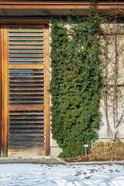 Der Eingang der Orangerie des Botanischen Gartens, umrankt von einer Kletterpflanze. (Bild: Bilder: Urs Bucher)