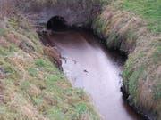 Verschmutzter Moosgraben in Malters: Fettgemisch aus einer Kompostieranlage ausgelaufen. (Bild: Luzerner Polizei)