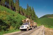 Nicht immer wird Holz legal geschlagen: Der Bund will nun den Import von Raubholz verbieten. (Bild: Alamy)