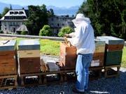 Bisher war es für Imker mühsame Zählarbeit, den Varroa-Milben-Befall ihrer Bienenstöcke zu bestimmen. Eine App soll künftig helfen. (Bild: KEYSTONE/LAURENT GILLIERON)