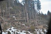 Das Sturmtief Burglind verursachte vor allem in Teilen des oberen Toggenburgs erhebliche Schäden im Wald. (Bild: Sabine Camedda)