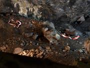 Eine 10,5-Zentimeter-Granate (links) und eine 50-Kilo-Bombe, wie sie Fotografen anlässlich einer Begehung des Munitionsdepots Ende Juni letzten Jahres antrafen. (Bild: KEYSTONE/ANTHONY ANEX)