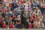 Publikumsmagnet: Die Seelöwen locken Gross und Klein ins Otarium. (Archivbild: Keystone)