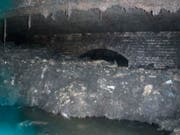 Arbeit des Wasserunternehmens brauchen rund 8 Wochen um den Kanal zu säubern. (Bild: South West Water via AP)