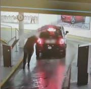 Die entscheidende Szene aus dem Video, das viral ging: Die Frau wird von der Schranke getroffen. (Screenshot)