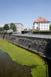 Algen können überall wachsen. Wie hier im Fluss Jona, aber auch an Hauswänden.Foto: Moritz Hager