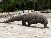 Keine Ruhe für den Waran: Indonesiens Regierung will Komodo nun doch nicht für den Tourismus sperren. (Bild: KEYSTONE/EPA/MADE NAGI)
