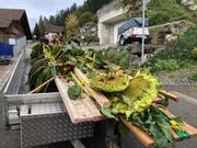 Gut gesichert werden die Sonnenblumen über den Ricken nach Jona transportiert (Bild: ZvG)