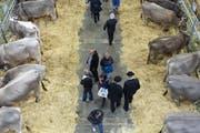 Unter die Olma-Messebesucher mischen sich auch Mitarbeiter der Stadt. (Bild: Gian Ehrenzeller/Keystone)