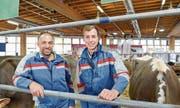 Peter Schlauri und sein Sohn Manuel arbeiten bei der diesjährigen Olma wieder zusammen im Stallteam der Halle 7. (Bild: Hanspeter Schiess)