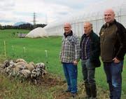 Wollschweine und Turopolien sollen Erdmandelgras bekämpfen. Darauf hoffen Stefan Schuler (Betreuer der Schweine, von links), Gregor Wyss (Landeigentümer) und Guido Leutenegger (Eigentümer der Wildschweine). Bild: PD