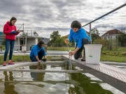 Forscherinnen der Eawag entnehmen Wasserproben aus einem Versuchsteich. (Bild: Thomas Klaper, Eawag)