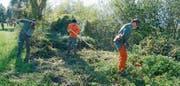Angehörige der Zivilschutzorganisation Werdenberg verrichten sachgemäss Auslichtungsarbeiten an einem Meliorationsgewässer in Sennwald. Bild: Hansruedi Rohrer