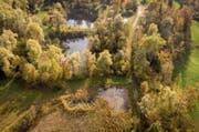 Die ehemalige Kiesgrube Espel ist heute ein Amphibienlaichgebiet von nationaler Bedeutung. (Bild: Benjamin Manser)