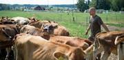 Die Neubaupläne von Landwirt Martin Schuler, im Bild mit seinen Jersey-Rindern, geben zu reden. (Bild: Maria Schmid, Drälikon, 11. Juli 2018)