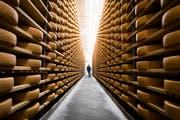 Ein Käser wandert in einem Reifekeller zwischen den Käsesorten von Gruyere d'Alpage. (Bild: Jean-Christophe Bott/Keystone, Tzintre, 1. Dezember 2018)