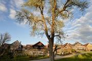 Das Projekt wurde in enger Absprache mit der kantonalen Denkmalpflege sowie den Burgauerinnen und Burgauern erarbeitet. (Bilder: PD)