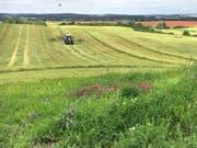 Vom Artenschwund betroffen sind vor allem Wiesen in der Nähe zu stark landwirtschaftlich genutzten Flächen. (Bild: Dr. Ulrike Garbe / Landesamt für Umwelt, Brandenburg)