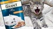 Lukrative Schleckmäuler: Mit Katzen- und Hundefutter setzt Nestlé 12,8 Milliarden Franken um. (Bild: zvg/Keystone/Montage:kob)