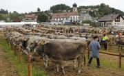Dichte Reihen von Kühen an der Viehschau in Mosnang. (Bild: Fränzi Göggel)