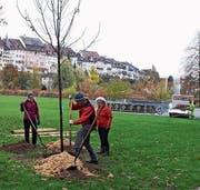 Anlässlich ihres 20-jährigen Bestehens pflanzte die Naturgruppe Salix an verschiedenen Orten Bäume. Bild: Patricia Zuber