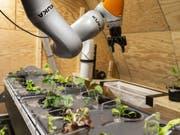 Für das letzte Mondhabitat entwickelten Studierende unter anderem ein automatisiertes hydroponisches Anbausystem. Beim nächsten Habitat soll alles ferngesteuert funktionieren. (Bild: Keystone/DOMINIC STEINMANN)