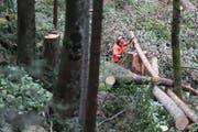 Ein Förster arbeitet im Blaswald in Lungern. (Bild: RogerZbinden, 17. August 2011)