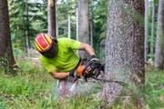 Ein Forstarbeiter wurde im ausserrhodischen Walzenhausen schwer verletzt. (Symbolbild: PD)