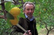 Citronnier François Mazet.