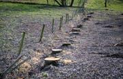 In einer Reihe und diret an der Grundstückgrenze standen die Trauerweiden. (Bild: Reto Martin)