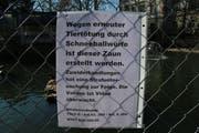 Mit diesem Hinweis machen die Verantwortlichen auf die Gefahr für die Enten durch Schneebälle aufmerksam. (Bild: Christoph Renn)