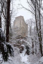 Nackter Stein im Winterwald: Die Ruine Neuburg.