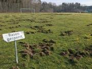 Der Rasen auf dem Fussballplatz in Berg hat am Mittwoch wie ein umgepflügter Acker ausgesehen. Die Hälfte des Rasens ist kaputt. (Bild: PD)