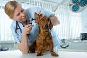 Grundsätzlich gilt bei Hunden und Katzen: Je grösser und schwerer sie sind desto teuerer werden sie. (Bild: fotalia)