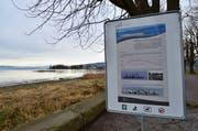 In der Arboner Bucht gibt es eine Kiesinsel für die Vögel. (Bild: Max Eichenberger)