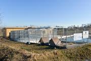 Die Schildkröten sind bereits in ihr neues Zuhause gezogen. Sie sind allerdings noch im Winterschlaf. (Bild: Donato Caspari)