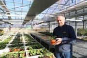 Im Gewächshaus züchtet Bruno Ambühl Pflanzen – am Donnerstag zum letzten Mal. (Bild: Jolanda Riedener)