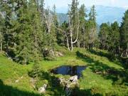 Das Waldreservat Murgtal zeigt sich als vielfältiger Lebensraum mit Wald und Offenflächen, Alt- und Totholz. (Bild: PD)