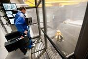 Verbrannt wird der Zuger Abfall in der Kehrichtverbrennungsanlage Renergia in Perlen im Kanton Luzern. (Bild: Boris Bürgisser (7. Januar 2015))