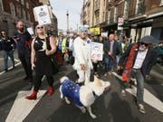 Britische Hundehalter haben am Sonntag , wie bereits im Oktober, gemeinsam mit ihren Vierbeinern in London gegen den EU-Austritt ihres Landes demonstriert. (Bild: KEYSTONE/AP/TIM IRELAND)