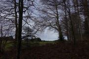 Wo brüten welche Vögel auf dem Lindenberg? Im Hintergrund der Mast für die Windmessungen auf dem Horben. (Bild: Eddy Schambron)