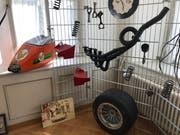 Gegenstände aus der aktiven Zeit des Flawiler Rennfahrers.