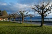 Beim Hirsgarten am See soll das Fitnessgerät «Workout Street» aufgebaut werden. (Bild: Stefan Kaiser, Cham, 13. März 2019)